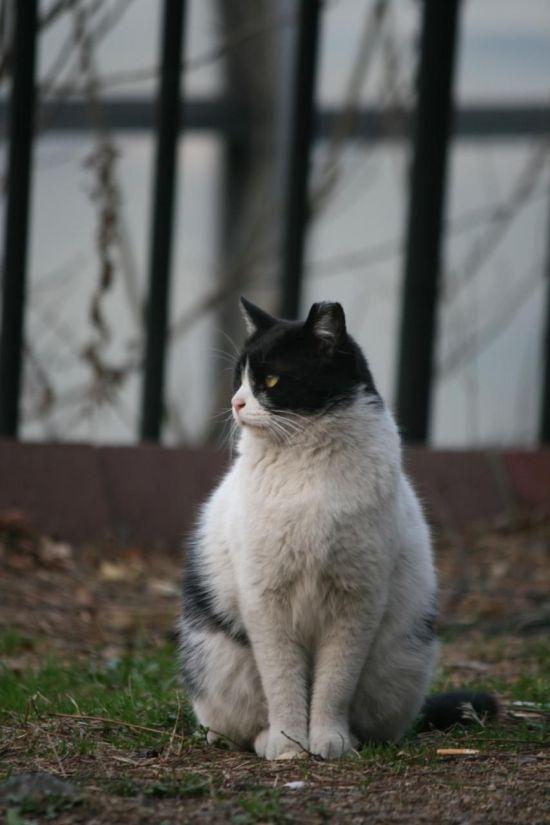 사진=중성화된 길고양이(서울시 제공)
