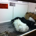 사진=본 기사와는 무관(미국의 한 펫숍의 강아지들. 온라인커뮤니티)