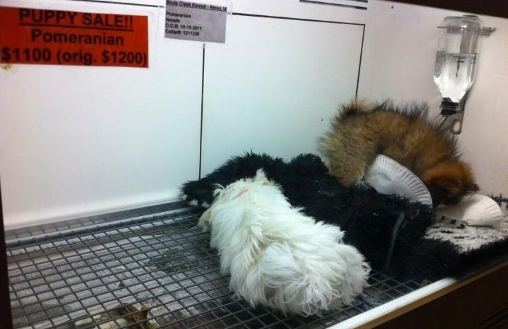 동물단체, 펫숍 79마리 강아지 방치 치사 사건 고발