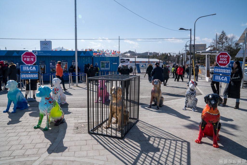사진=지난 13일 평창 메달플라자 앞 횡계로터리 부근, 꽃개들과 개고기 금지 피켓을 들어올린 동물해방물결 활동가들