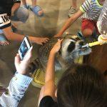 동물복지문제연구소 어웨어, '라쿤카페 금지법' 발의 환영