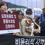 """동물보호단체, """"동물복제 연구 및 사업 폐지하라!"""""""