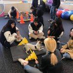 서울종합예술실용학교(SAC), 펫피트니스 전공으로 트레이너 양성