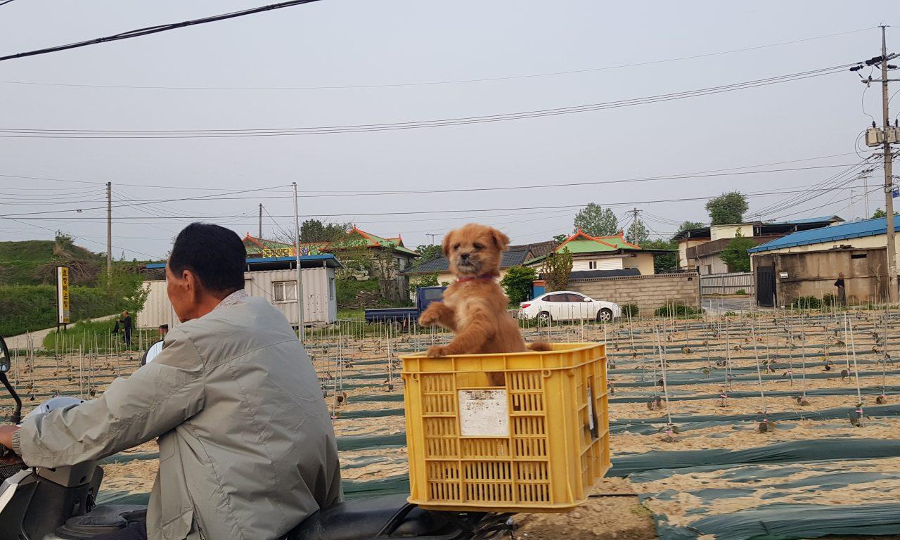할아버지와 강아지의 행복한 드라이브