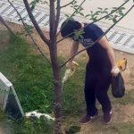 경의선 고양이 살해범, 징역 6개월 실형
