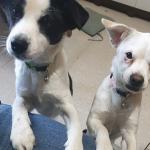 [단독] 강아지 2마리 닭뼈 먹이고 동사시킨 BJ…네티즌 비난 폭주