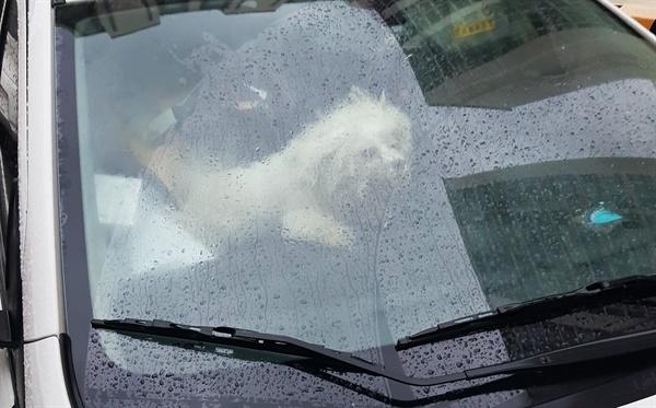 1년 넘게 차 안에 방치된 강아지 결국 구조돼
